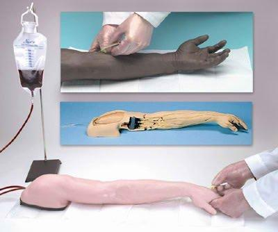 Advanced Venipuncture and Injection Arm Life/form LF01121U Each/1